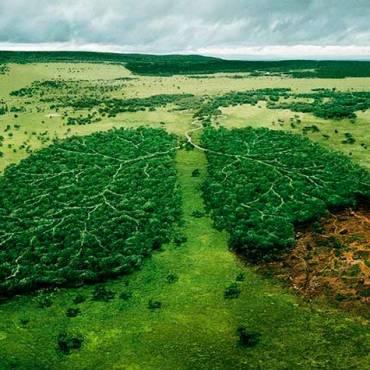 El Amazonas no es el pulmón del planeta