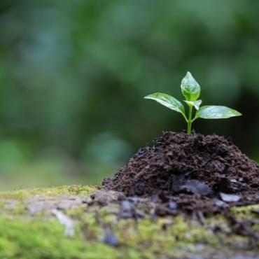 8 Razones por las que plantar un árbol