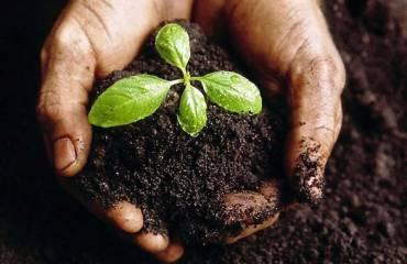 5 beneficios de las plantas aromáticas